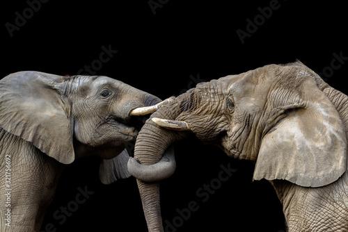 Photo Elephants fighting together