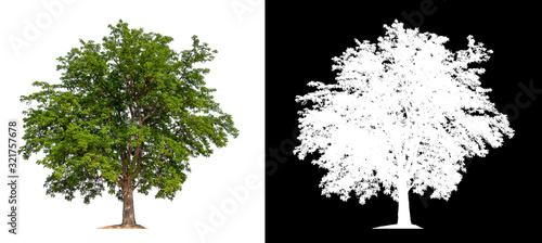 isolated tree on white background with clipping path Wallpaper Mural