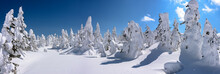 Yamagata Frozen Forest With Sn...
