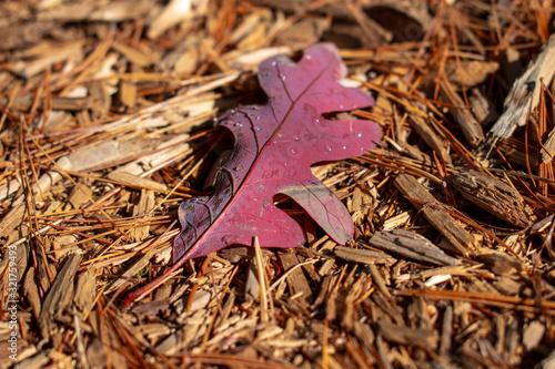 autumn leaf on woodchips Canvas-taulu