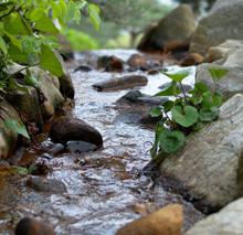 Closeup Of Small Stream