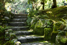 Moss Covered Stairs In Brightly Lit Garden