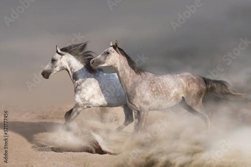 stado-bialych-koni-galopujacych-na-piaszczystej-ziemi