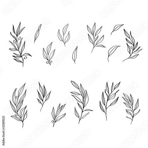 Sketch hand drawn leaves vector.