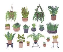Home Plants Vector Illustratio...