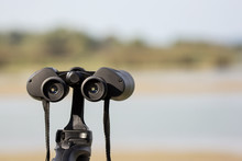 Bird Watching With Binoculars ...