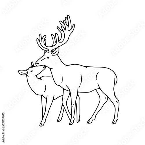 Tableau sur Toile Wild deer love couple female and male buck with branched horns vector outline black white sketch illustration