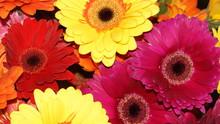 Flowering Garden Plants: Roses...