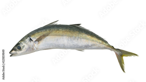 Fotografija Round scad fish or mackerel scad isolated on white background, Decapterus