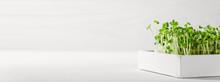Micro Greens Arugula Sprouts I...