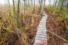 Old Wooden Boardwalk Cuts Thro...