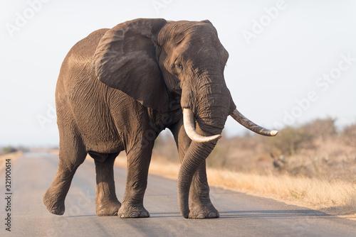 Naklejki słoń  elephant-in-the-wilderness-african-elephant-in-the-wilderness