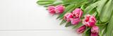 Fototapeta Tulips - Pink tulip isolatedon white.