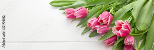 Pink tulip isolatedon white.