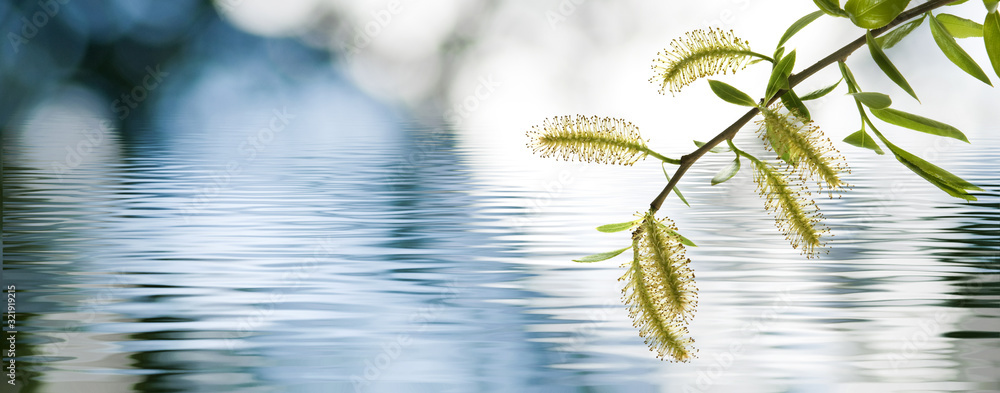 Fototapeta image of a tree branch above the water
