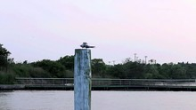Two Small Seabirds Sharing One Piling Post Above The Water.