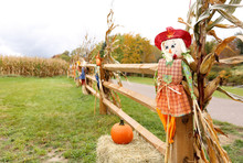 Scarecrow And Pumpkin In From ...