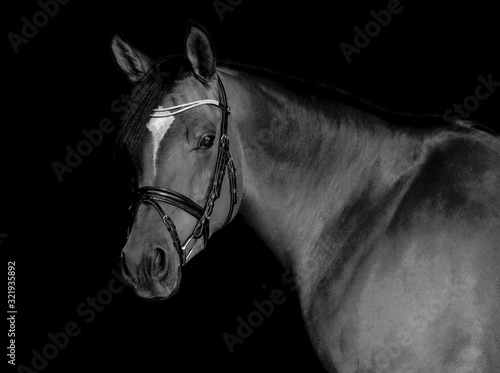 Arabian Horse Black Background