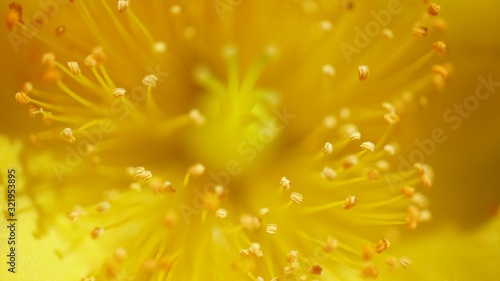 Closeup shot of stamens of a yellow flower