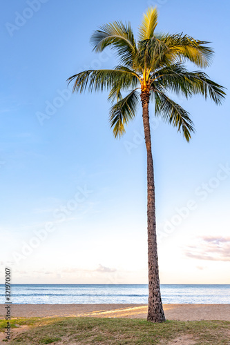 One beautiful palm tree on the beach at sunrise, at Waikiki Beach in Honolulu, HI. Portrait orientation.