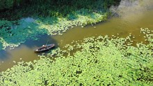 Aerial Drone View Of A Man Rowing In A Wooden Boat Floats Through Lotus Flowers