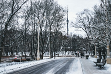 Winter Park In Moscow With Snowy Trees. Winter Landscape.