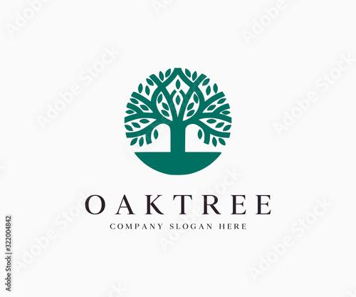 Obraz Oak Tree Silhouette Logo Icon Vector Illustration Template - fototapety do salonu