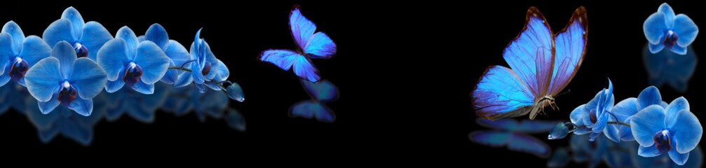 Fototapeta Storczyki blue butterfly and blue orchid