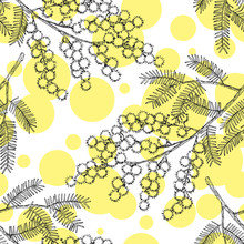 Seamless Pattern With Hand Drawn Blooming Mimosa Or Silver Wattle Flowers.