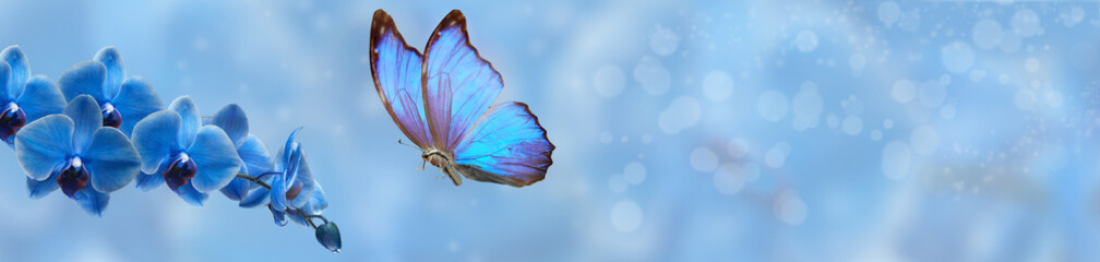 Fototapeta na wymiar blue butterfly and blue orchid