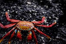 Crab In Beach