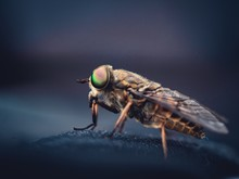Selective Focus Shot Of A Housefly With A Dark Blurry Background