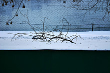 A Dry Branch On The Snow-cover...