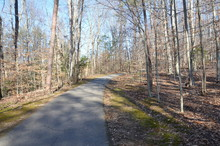 Asphalt Trail Or Path In Forest Or Woods