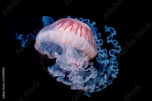 Photo giant jellyfish swimming in dark water.