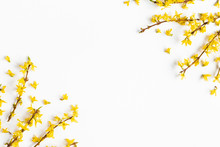 Flowers Composition. Yellow Flowers On White Background. Spring Concept. Flat Lay, Top View