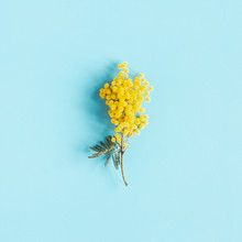 Flowers Composition. Mimosa Flower On Blue Background. Spring Concept. Flat Lay, Top View