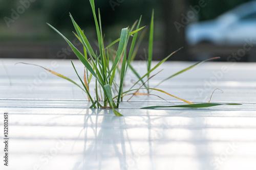 Photo Crecimiento de cereal sin tierra