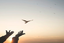 Magical Moment Of A Person Who Frees A Bird In The Sky