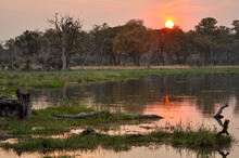 A Beautiful Sunset In Moremi G...