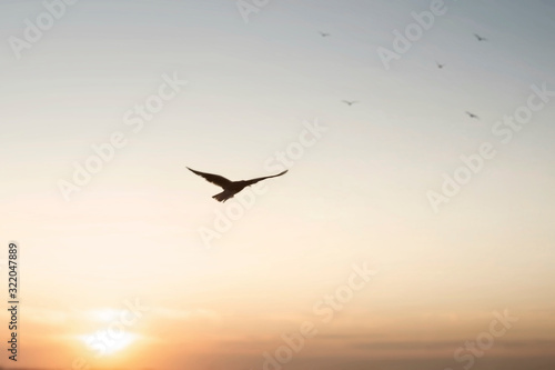 Foto freedom concept of a bird flying in the sky