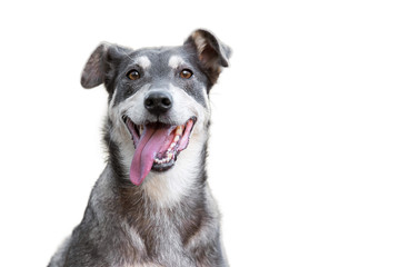 Smiješni pas izoliran na bijeloj