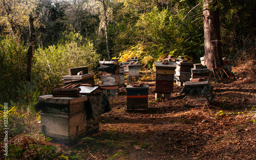 Mountain honey. Traditional beekeeping in the Forest. Wallpaper Mural