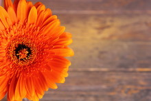 Large Orange Gerbera Flower On...