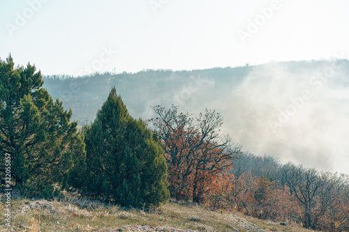 Fototapeta Autumn rural scenery with  mountains and forests covered with morning fog obraz