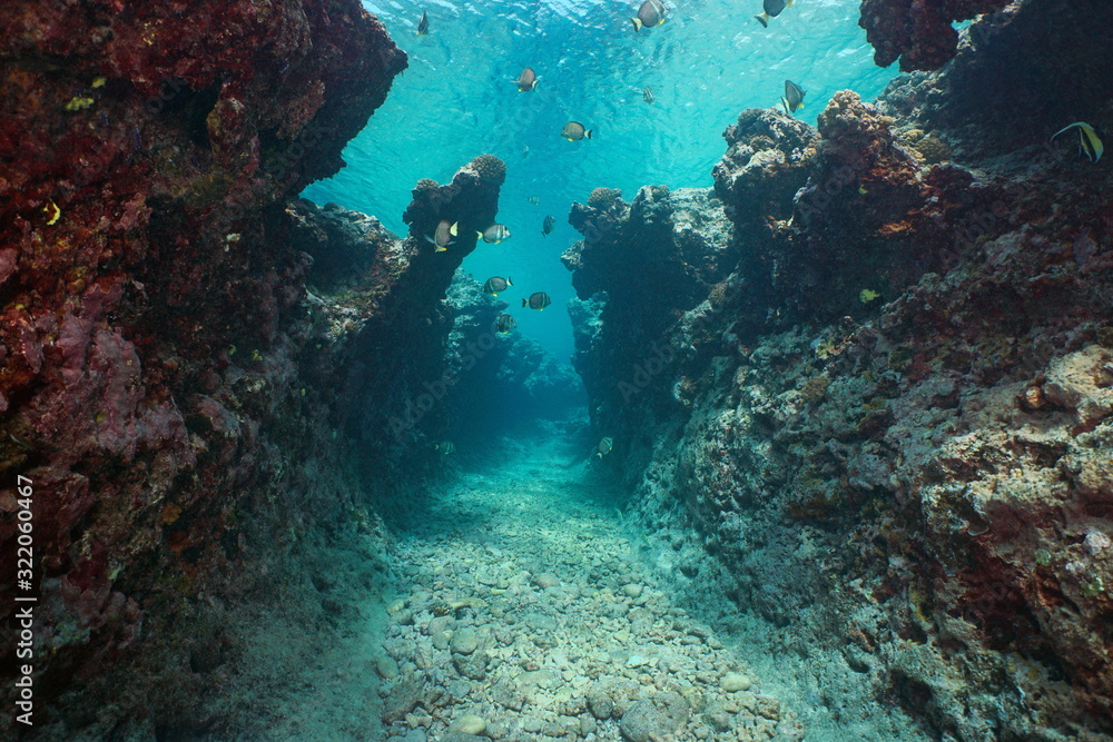 Fototapeta Underwater seascape, a narrow trench with some fish in a rocky reef eroded by the swell, Pacific ocean, French Polynesia, Oceania