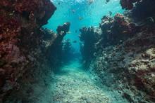 Underwater Seascape, A Narrow ...