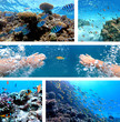 Underwater collage with diver swimming, exotic fishes and coral reef of the Red Sea, Clownfish, Sergeant-major fish, Goldfish and other marine life near Hurghada, Egypt