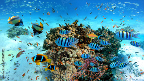 Leinwand Poster Underwater scene with exotic fishes and coral reef of the Red Sea, Clownfish, Ba