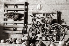 Black And White Of Old Bicycle...